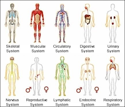 Body Systems - ThingLink
