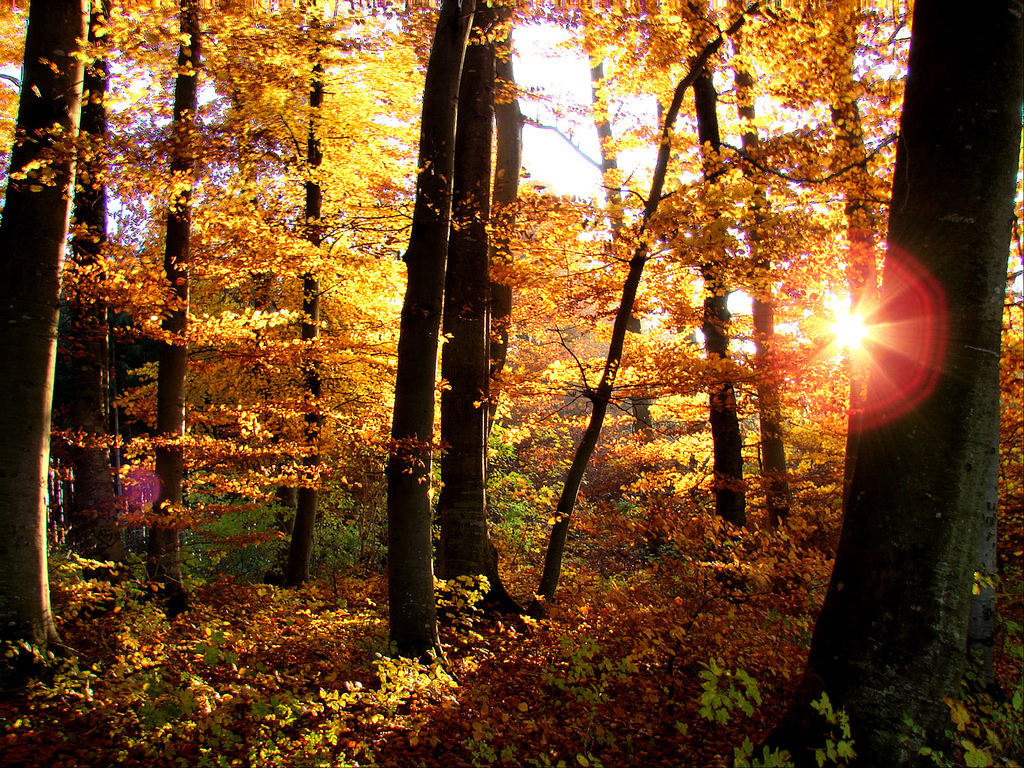 Deciduous Forest - ThingLink