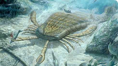 what happened to the trilobites a fossil group of extinct marine organisms The series specifically refers to these creatures as fossil pokémon, which need to  be  kabuto and kabutops: trilobites, horseshoe crabs, sea scorpions   picked another group of organisms which blossomed during this age— the sea  lilies,.