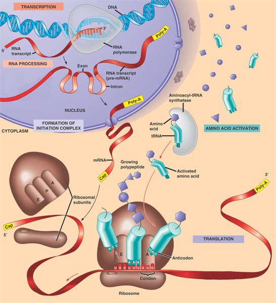 Central Dogma - ThingLink