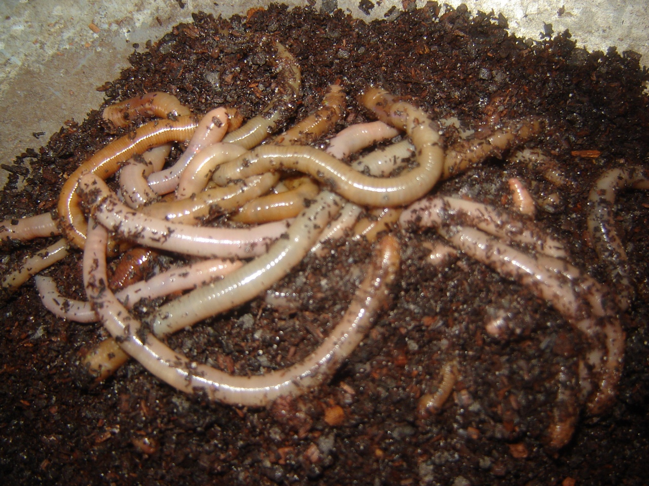 Worms are a decomposer to my