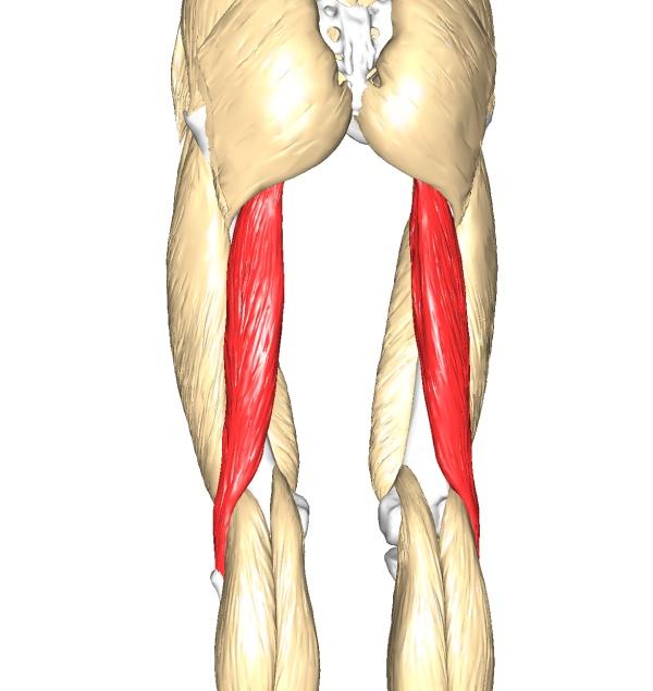 Il Sistema Muscolare Thinglink