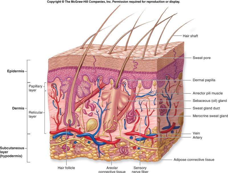 Jesse D: Skin System