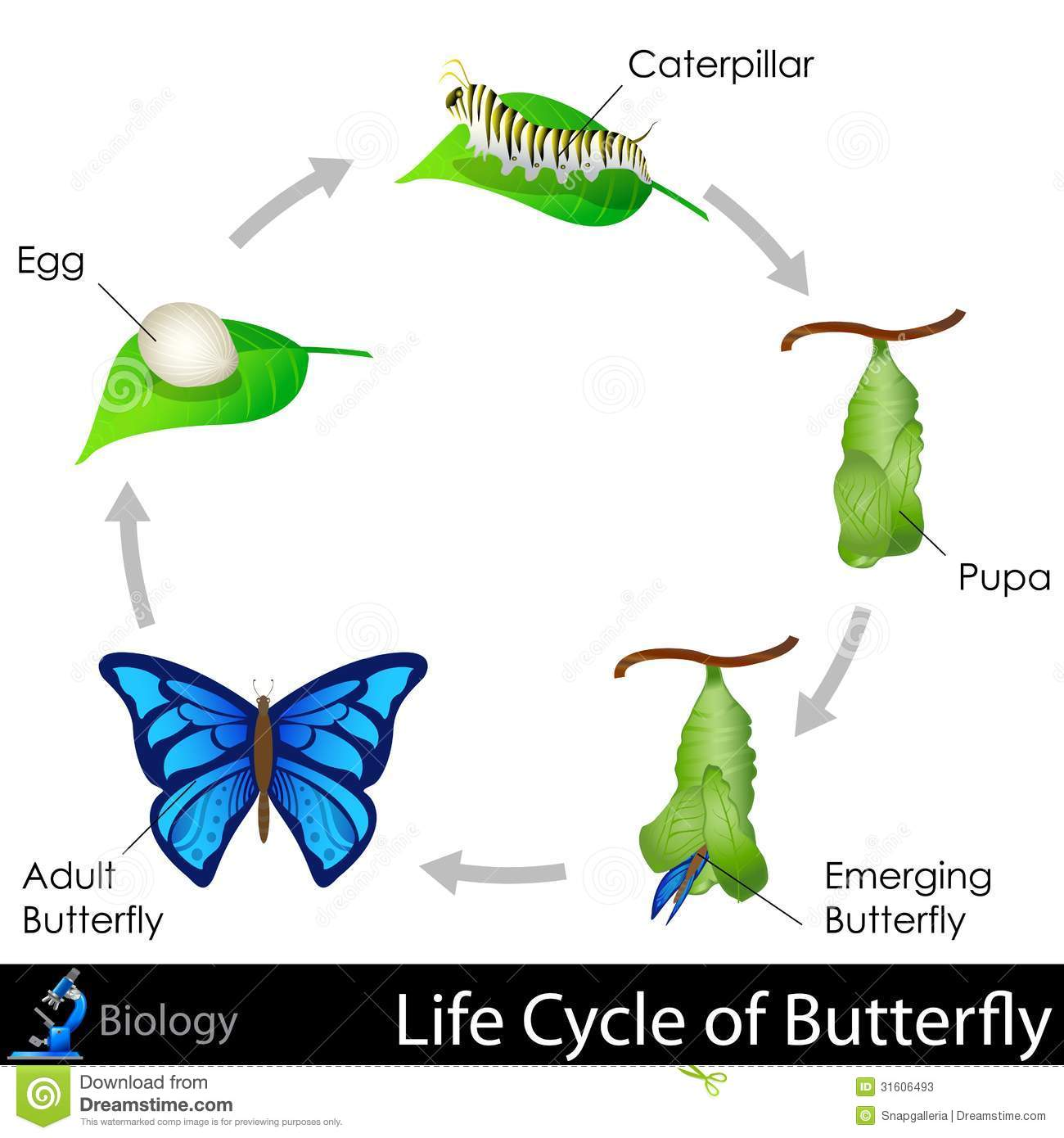 the biology and life cycle of