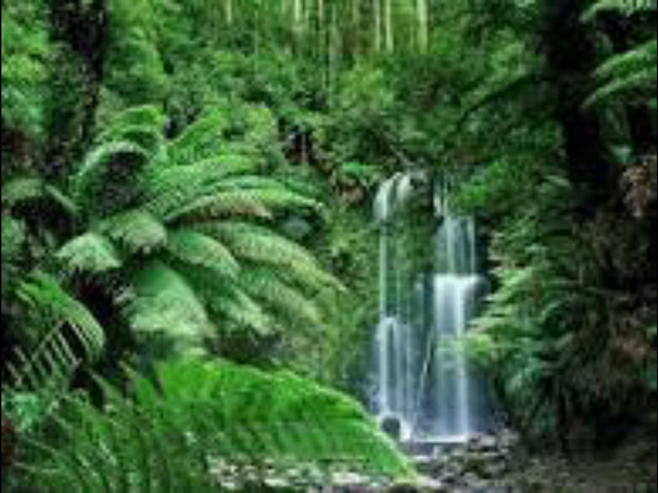 Tropical rainforest by katy i thinglink africa the major tropical rainforest in africa is in the southern central portion of the continent with the congo river running through it sciox Image collections