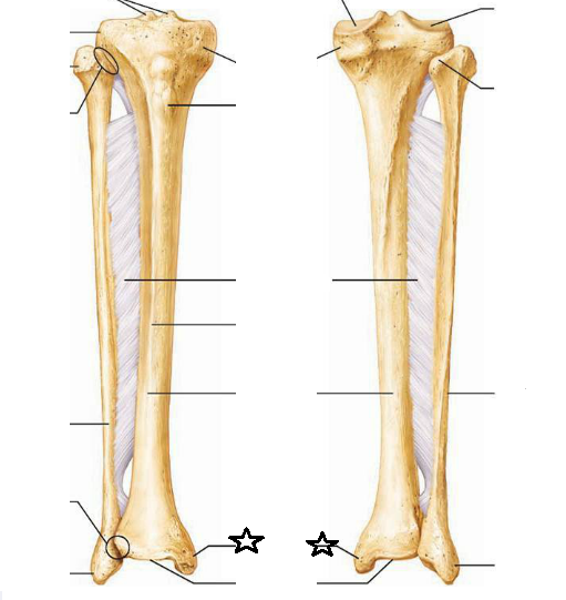 Tibia And Fibula Diagram Blank - Block And Schematic Diagrams •