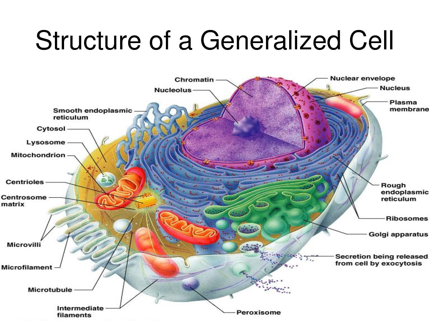 produce the energy currency of the cell atp i e phosp