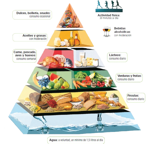 piramide alimenticia los lacteos