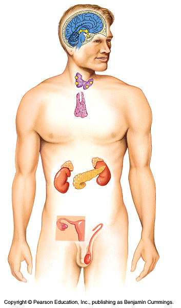 physioex 8 0 renal system physiology
