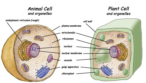 cytochemistry animal and plant tissues