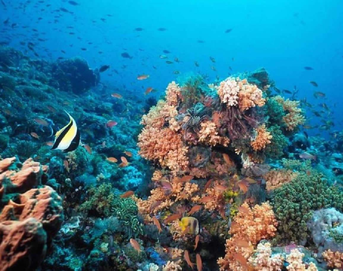 Marine Biomes - ThingLink