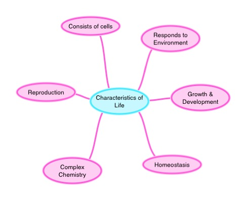 Characteristics Of Life Concept Map 96543 | IMGFLASH