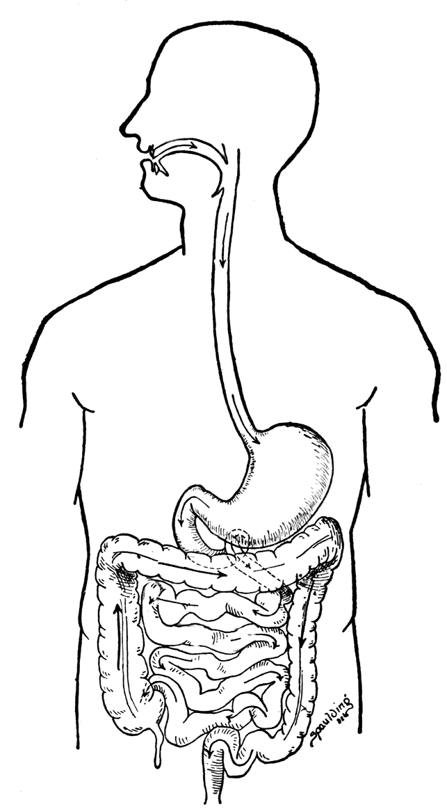 the digestive system thinglink