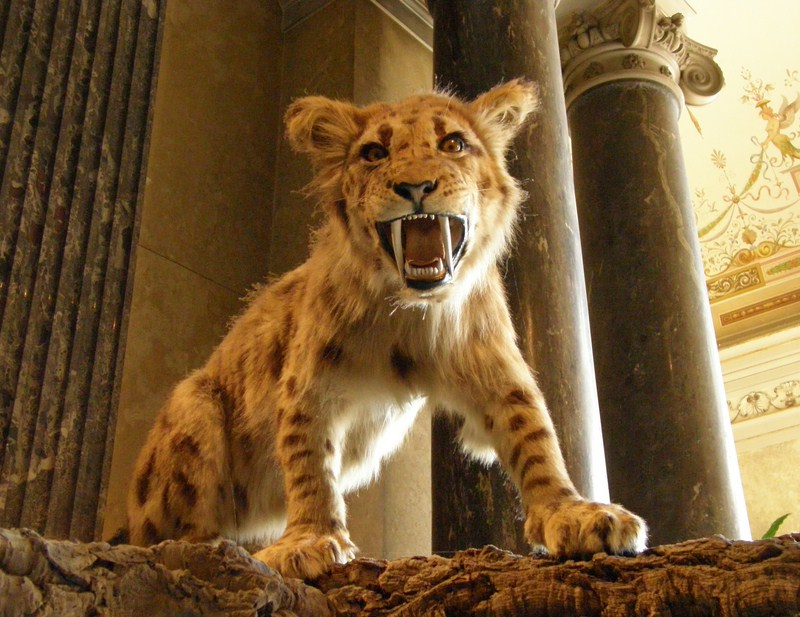 The Saber Tooth Tiger - ThingLink