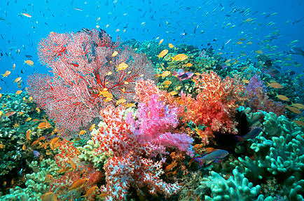 The Coral Reef Biome - ThingLink