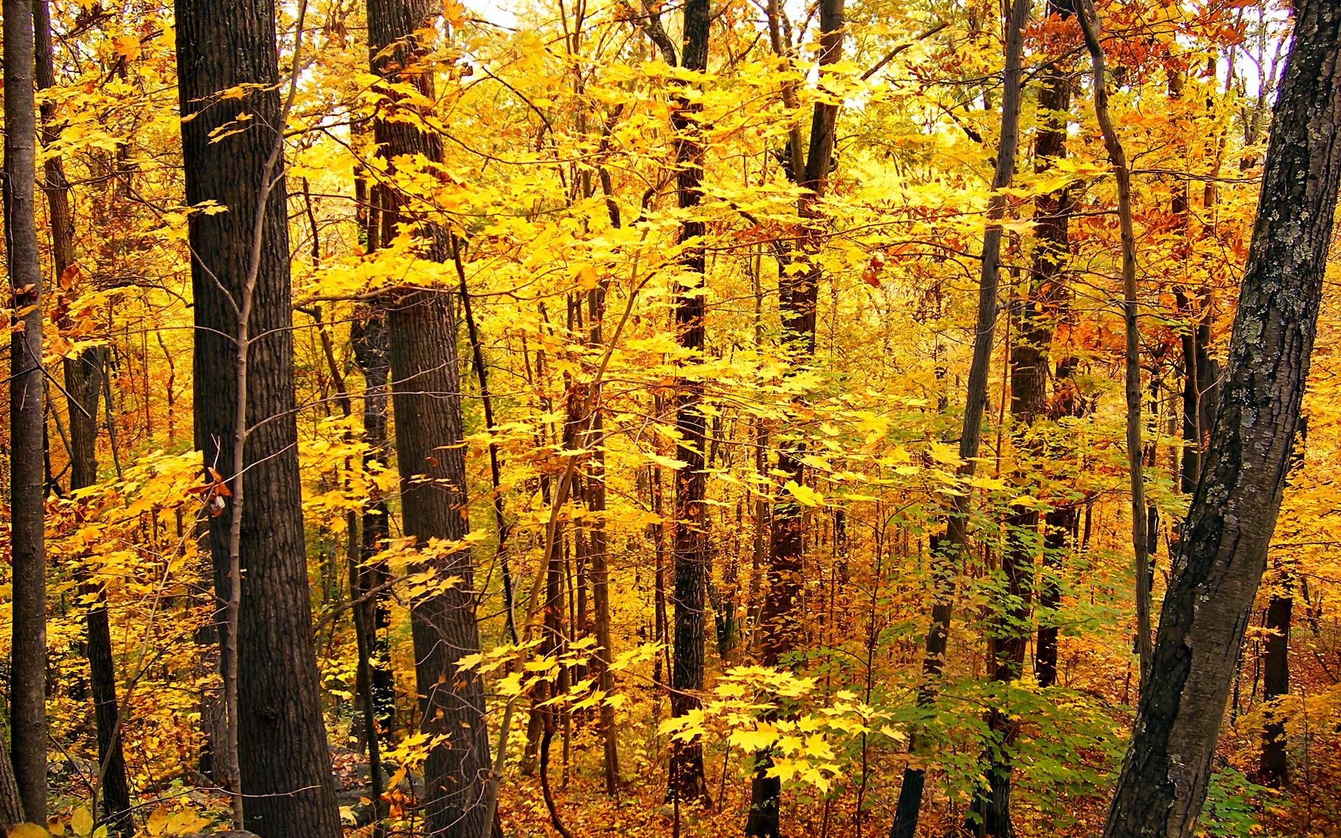 Temperate Deciduous Forest Biome By: Matthew MacKinnon - ThingLink