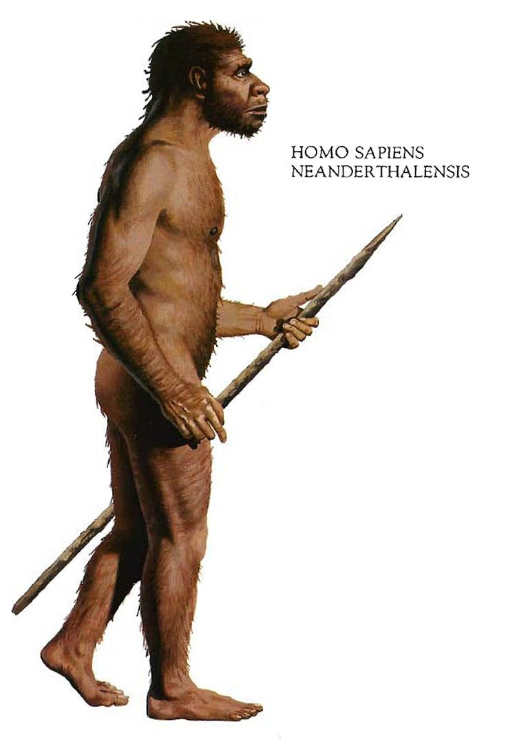 homo neanderthalensis the neanderthals Who were the neanderthals do humans really share some of their dna learn facts about neanderthal man, the traits and tools of homo neanderthalensis, and how the species fits into our evolution.