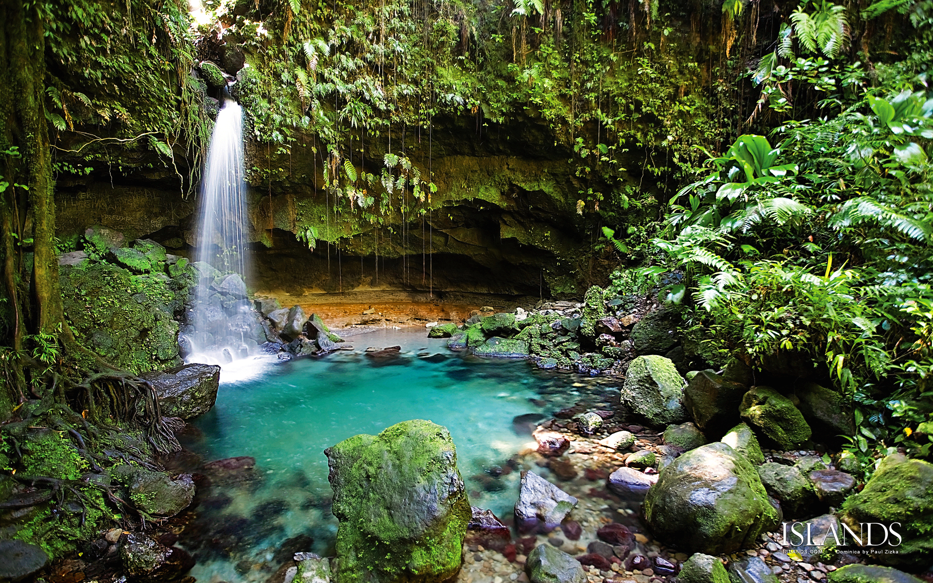 Rainforest - ThingLink