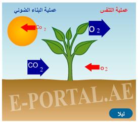 مصدر الأكسجين الناتج في عملية البناء الضوئي ناتج من الماء