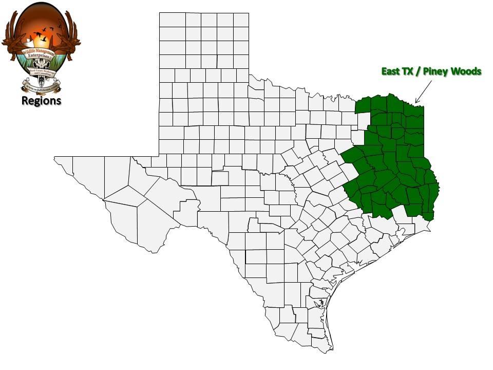 Piney Woods Texas