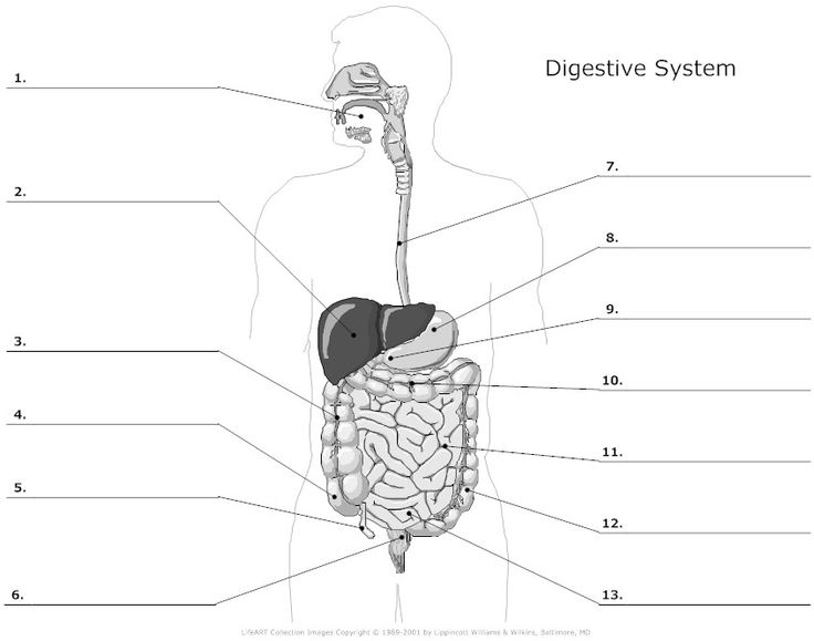 Digestive System Worksheet Free Worksheets Library | Download and ...