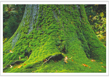 The Name Of Your Plant Moss Is Moss Autotroph Or Heter