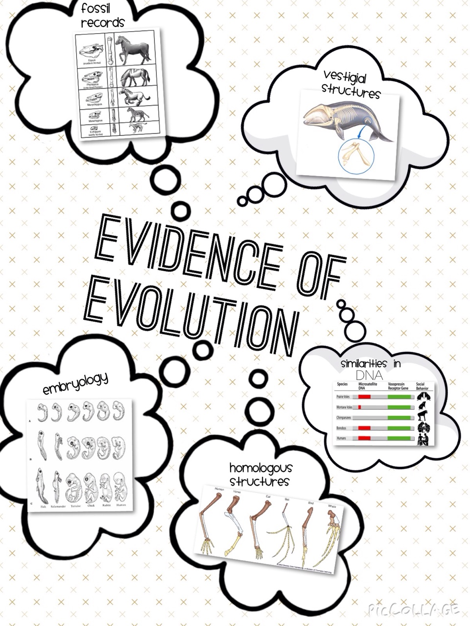 Biochemical evidence for evolution worksheet answers lab 12