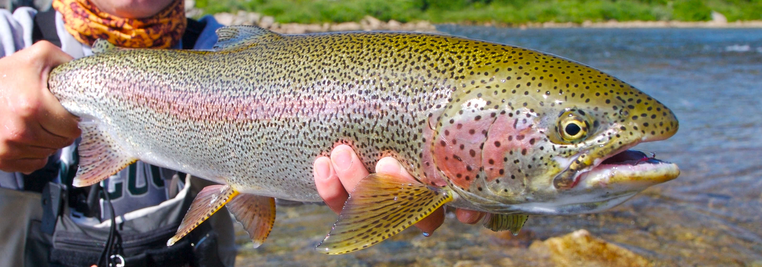 Freshwater fish kidney dilute urine - Freshwater Fish Kidney Dilute Urine
