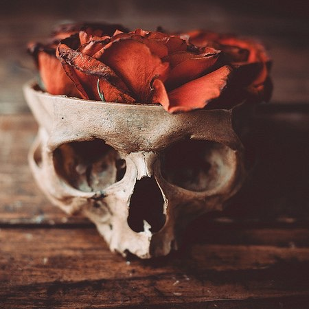 """a rose for emily foreshadowing """"a rose for emily"""", william faulkner's most widely anthologized short story has been analyzed and debated over the possible meanings for many years."""
