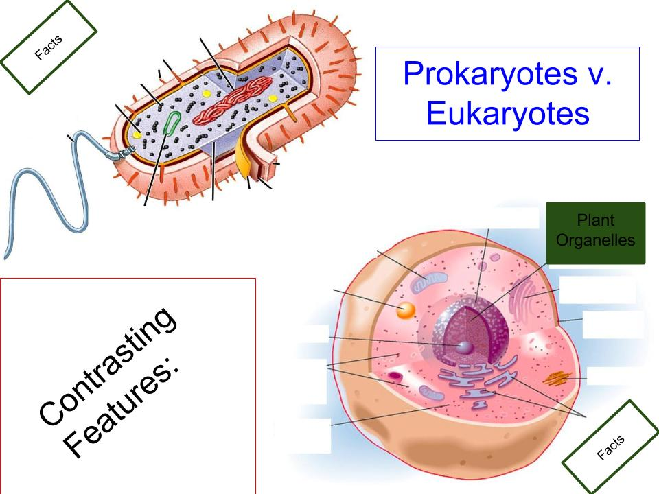 Cell wall nucleus nucleolus smooth endoplasmic reticulum thinglink ccuart Choice Image