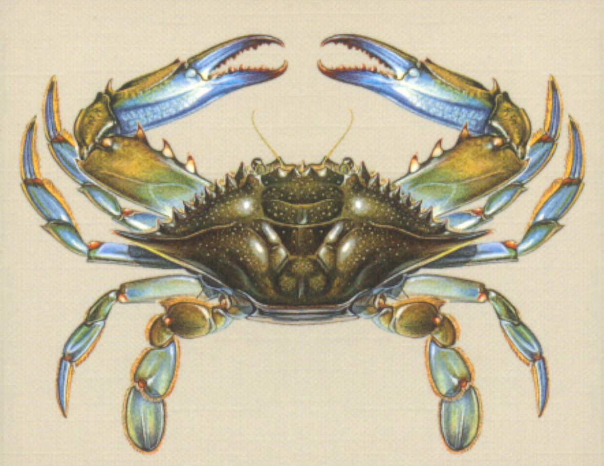 What do crabs eat?, the anatomy of a crab, where they li... - ThingLink
