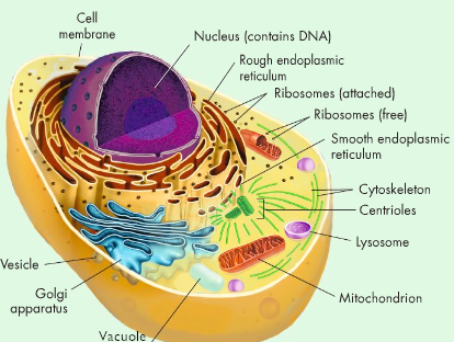 Mcdonaldscell Barrett Howell Cell Analogy