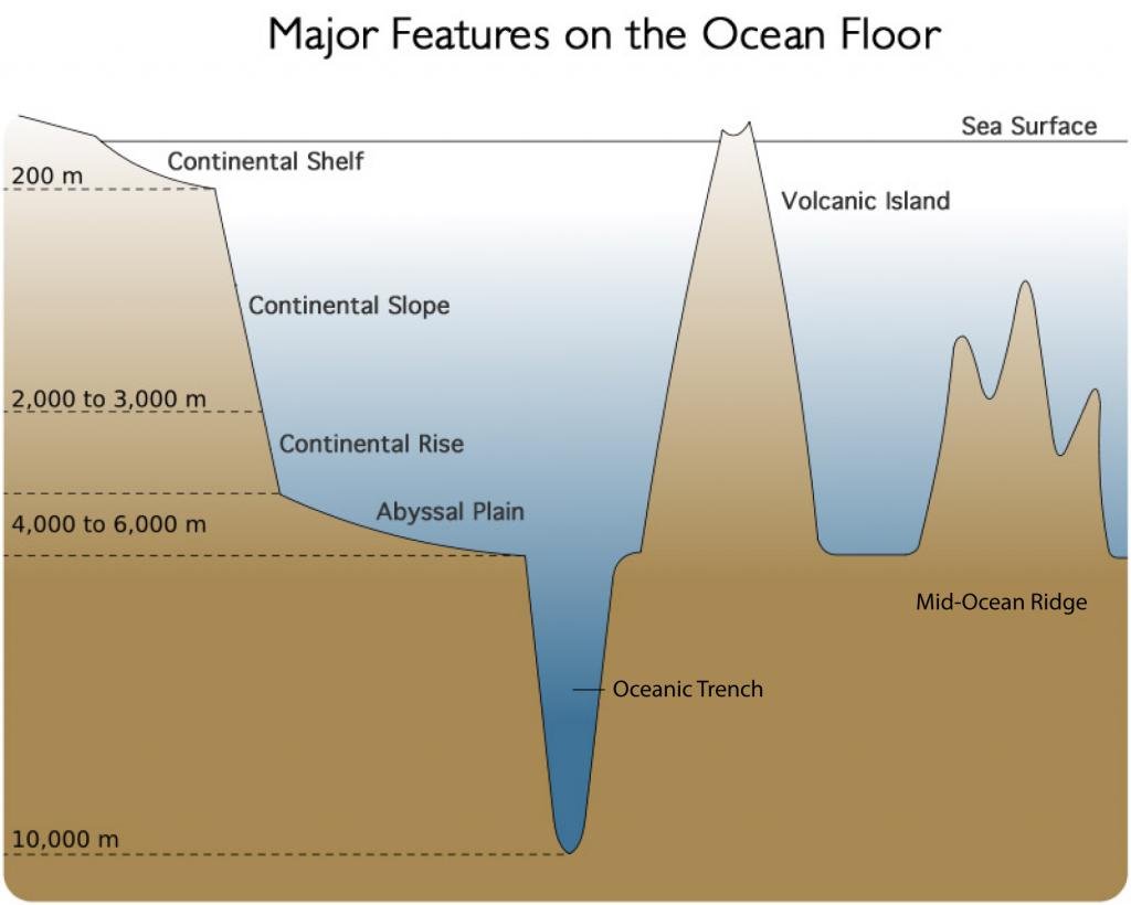 Printable Diagram Of The Ocean Floor - Modern Area Rugs, Floor ...