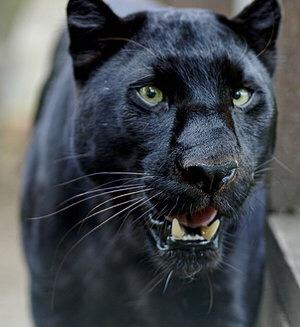 ecorobots black panther adaptations eman sattar - ThingLink