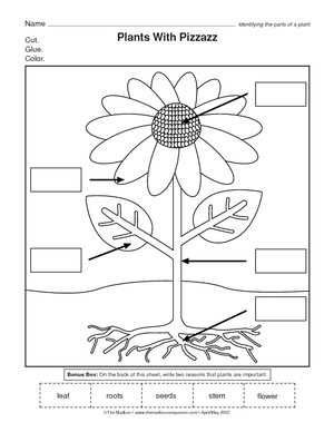 Printables Parts Of A Plant Worksheet parts of a plant worksheet fireyourmentor free printable worksheets flower for kindergarten math grade 2