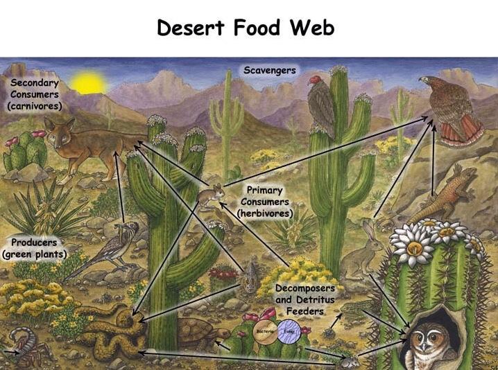 4th grade desert ecosystems report