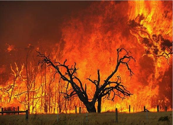 Image result for nsw bushfire aboriginals