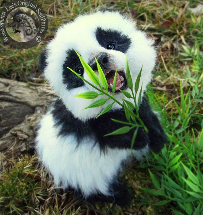 Excepcional El oso panda es un mamífero vertebrado, - CARACTERÍSTICAS  CM68