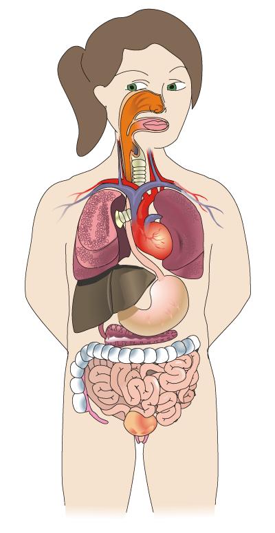 Cuerpo Humano - ThingLink
