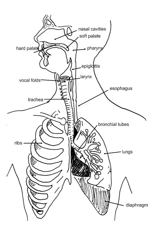 The Voice Body Diagram