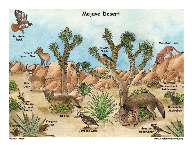 Ecosystem group 7 - Desert project - ThingLink